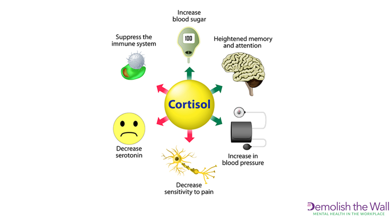 Cortisol mind map